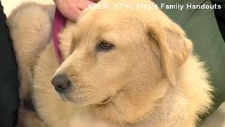 Dog with failing kidneys receives miracle donation