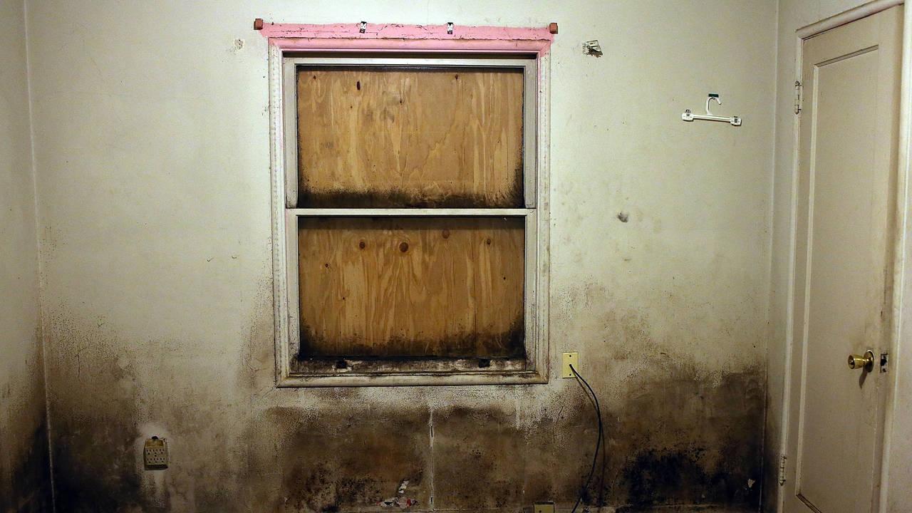 mold-getty.jpg
