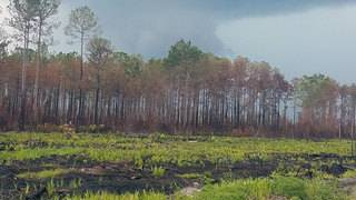 With West Mims fire 65% contained, parts of Okefenokee to reopen