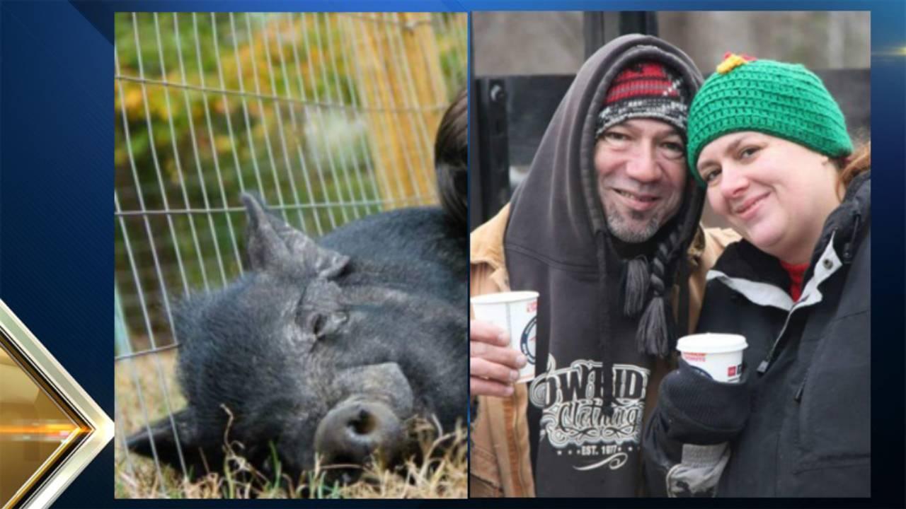 150-Pound Wild Boar Attacks Couple on Massachusetts Farm