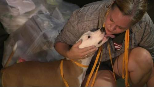 Program aims to alleviate overcrowding at Houston animal shelters