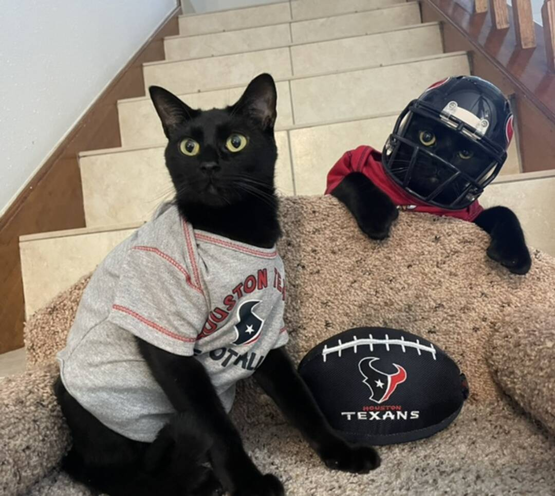 Who's ready for some football? We are! Go Texans! 🖤Timmy & 🖤Tommy🏈