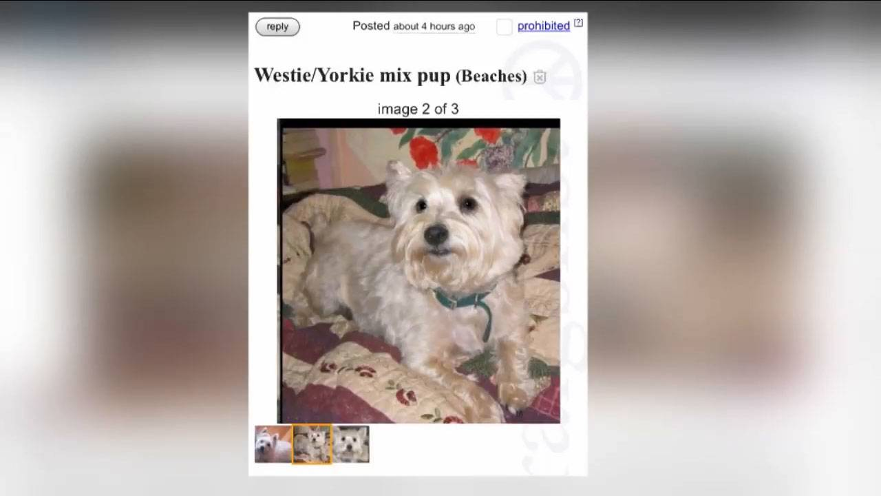 Woman finds her missing dog listed for sale on Craigslist