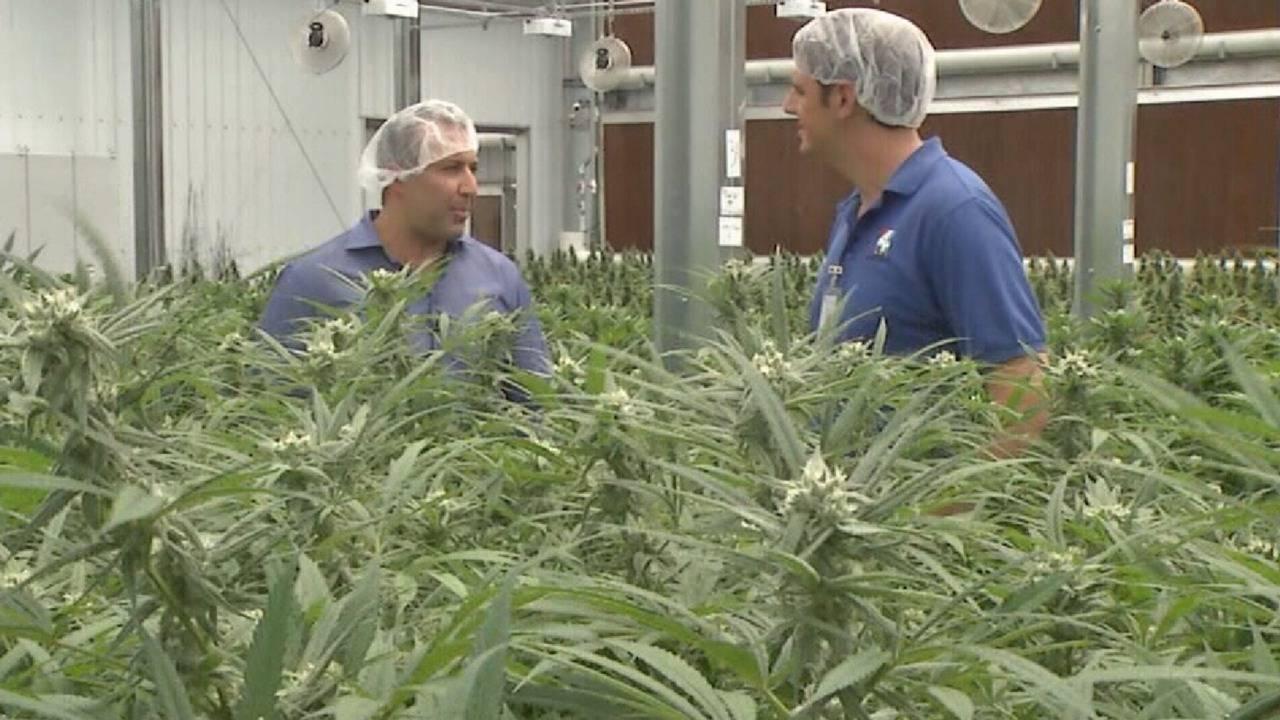 High demand for medical marijuana means more jobs
