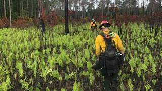 Massive Okefenokee wildfire almost out after days of soaking rain