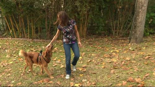 Nonprofit depends on donations to keep dogs healthy, happy