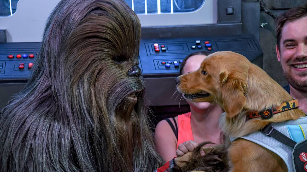 sparrow and chewie_1558635485410.jpg.jpg