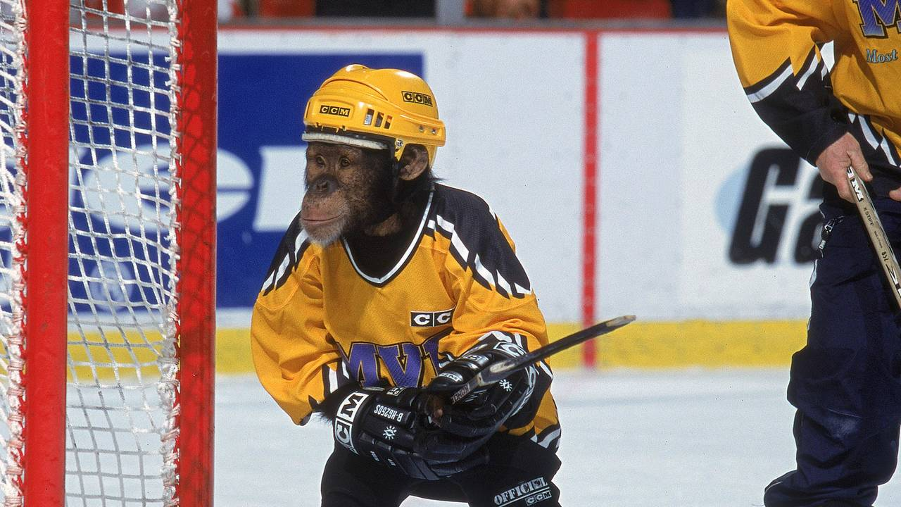 Chimp playing hockey