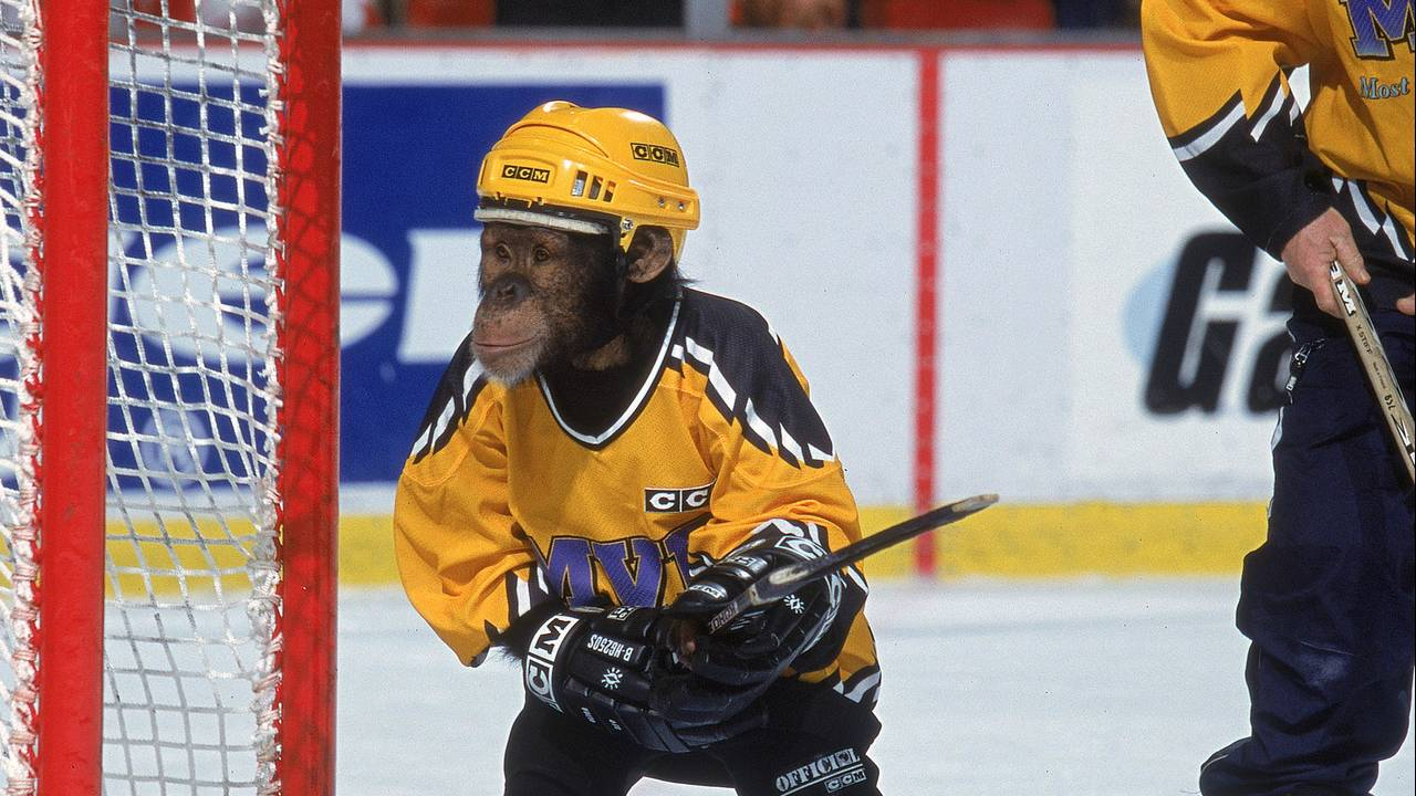 Chimp playing hockey