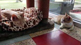 SA Humane Society hopes to find 3 special-needs cats their new homes