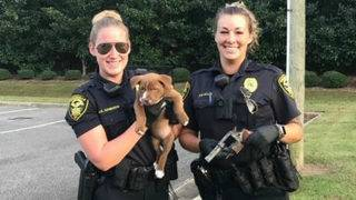 Pit bull puppy digs up fully-loaded gun in North Carolina apartment&hellip&#x3b;