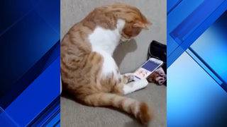 Cat nuzzles phone after seeing video of deceased owner in viral video