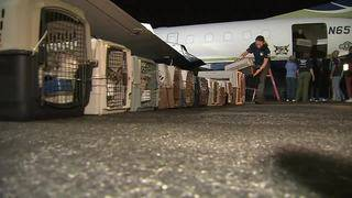 100 dogs, cats arrive in South Florida from Puerto Rico