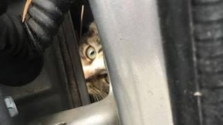 Kitten survives 45-mile trip trapped under car