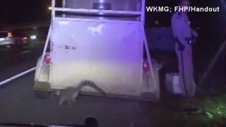 Lemur flees from trailer during Fla. traffic stop