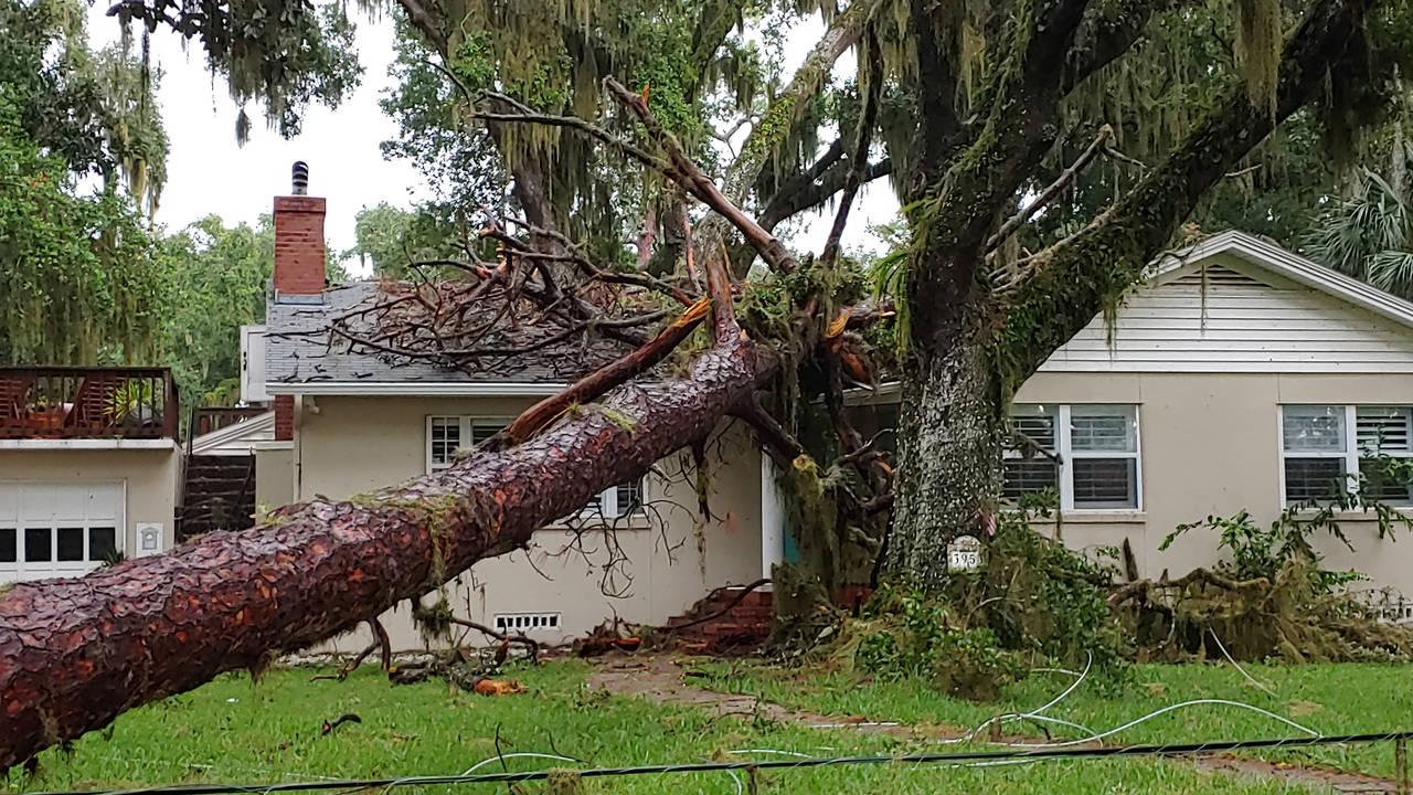 07-03-19 Tree On House 2