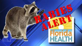 Rabies alert issued for Kendall area after infected raccoon found at Zoo Miami