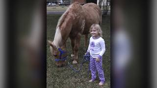 2nd horse shot at family's Liberty County ranch