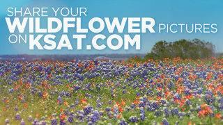 KSAT12's Wildflower Photo Gallery