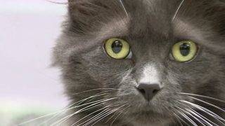 Empty the Shelters day returns to help pets get adopted in SE Michigan