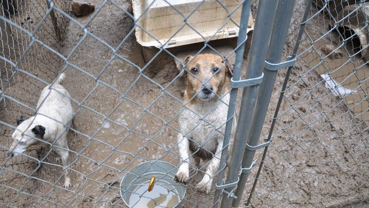 Dozens of dogs rescued from Michigan puppy mill