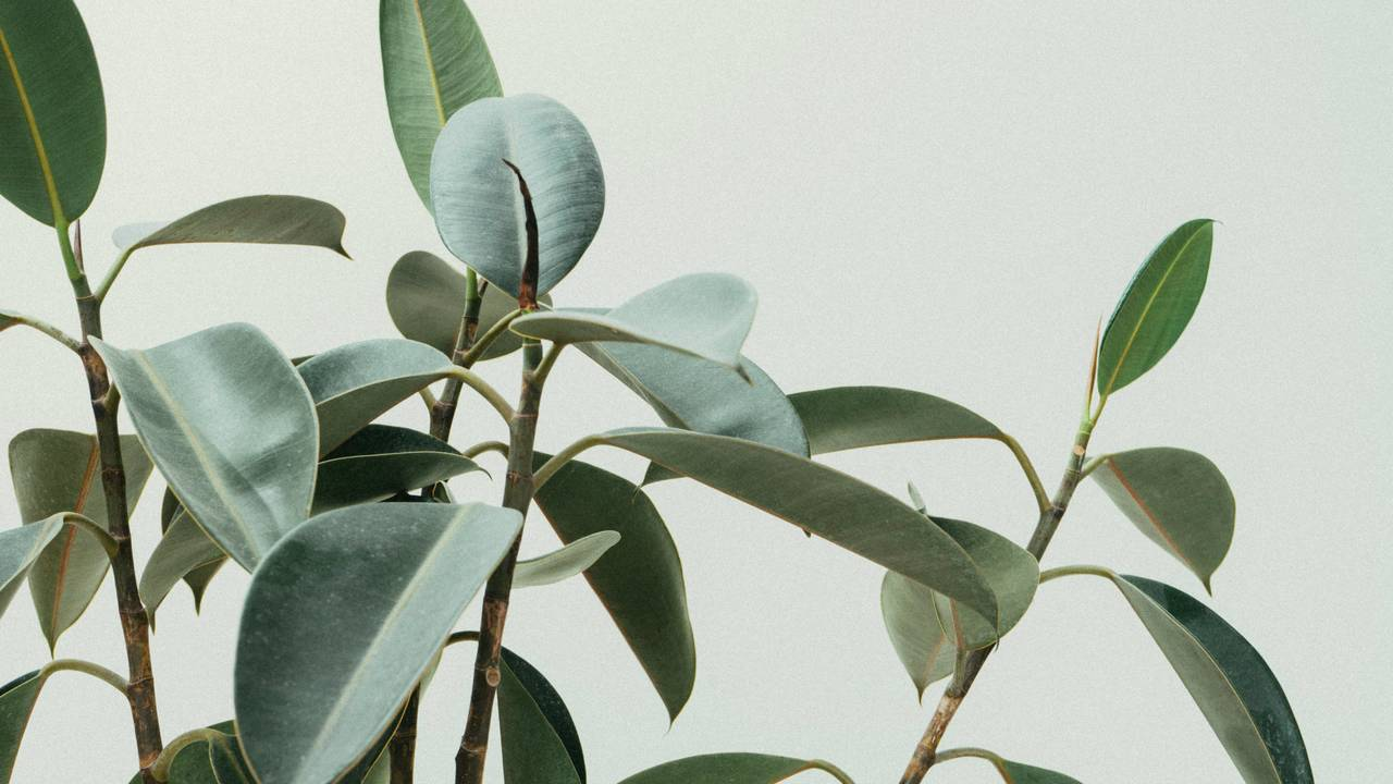 plant-branches-generic.jpg