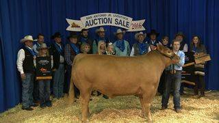 Grand Champion steer auctions for $105,000