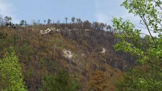 Tye River Fire now 60 percent contained