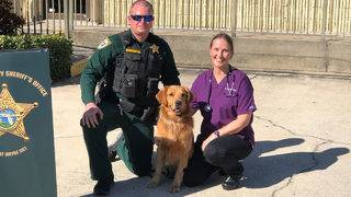 Veterinarian, Brevard County sheriff warn Narcan is not cure all