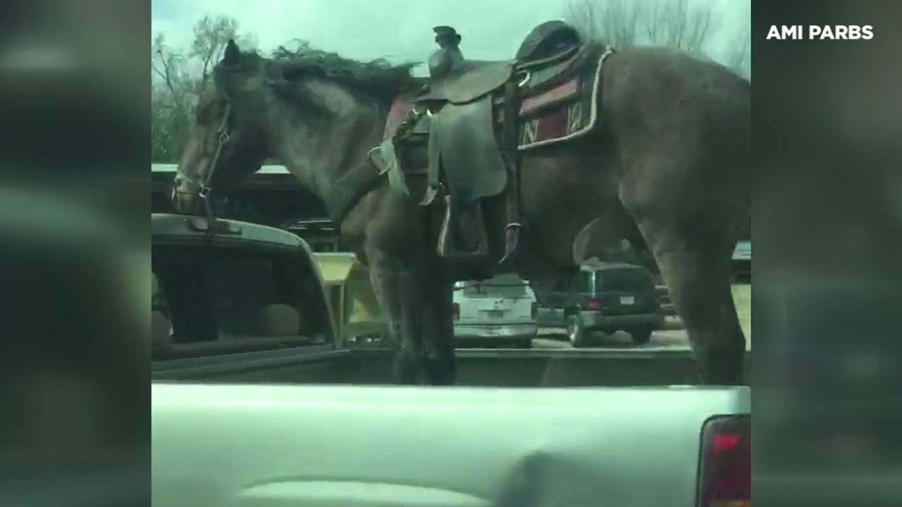 TX-Horse in truck59397273-75042528