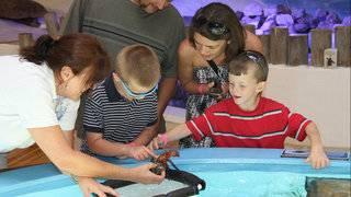 Spring Break with the kids: Cheap ideas around Florida