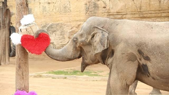 San-Antonio-Zoo-Elephant