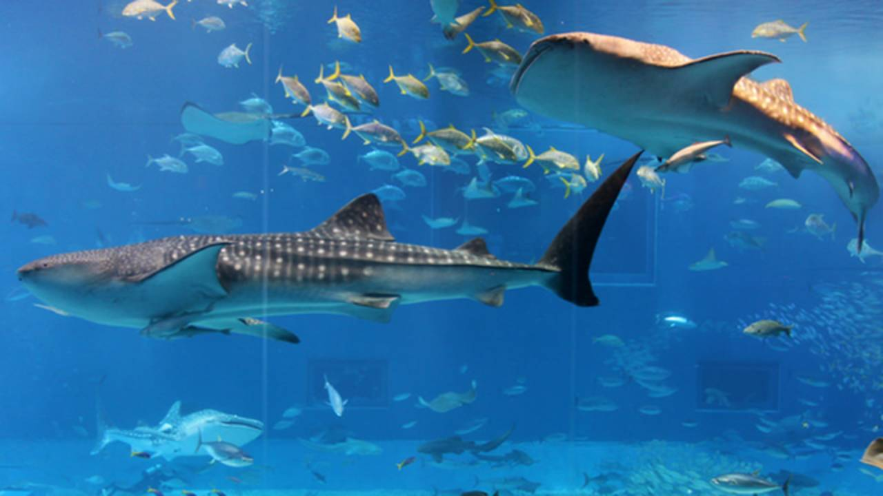 Aquarium_1530976201762.png