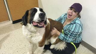 Austin woman drives to Nebraska to reunite with dog that went missing 2&hellip&#x3b;