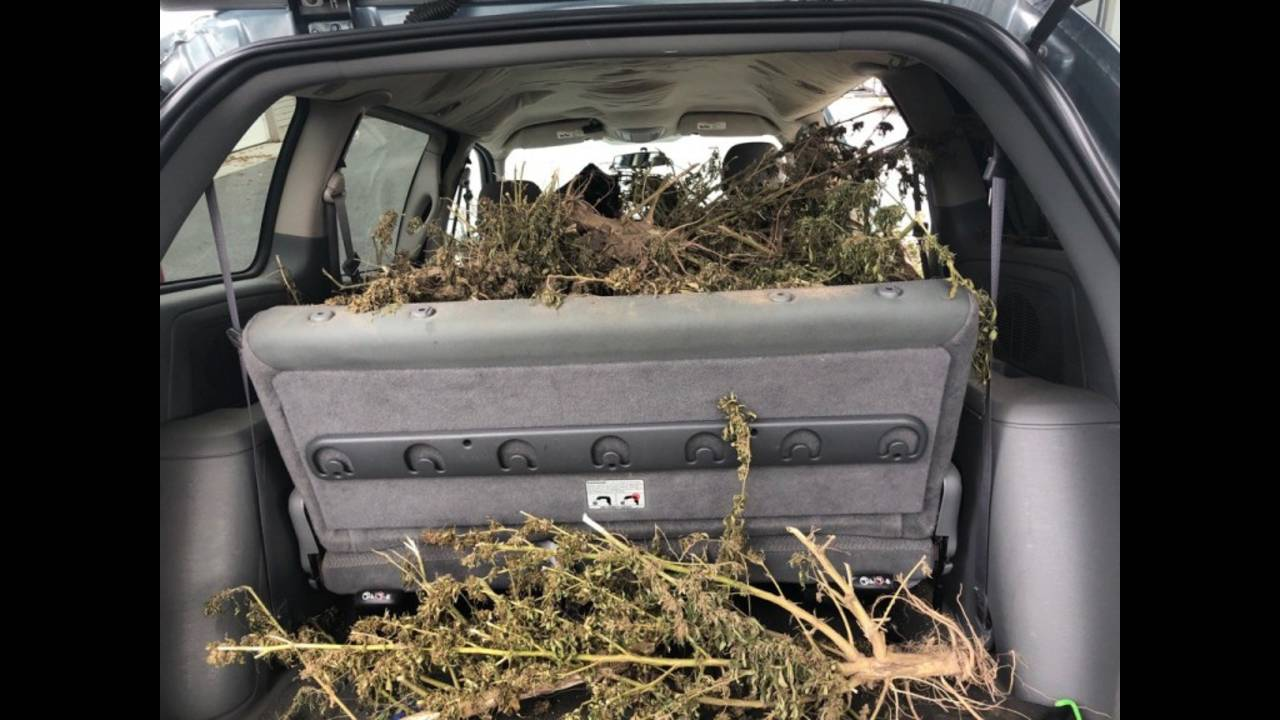 Dover Police Marijuana Bust (1)_1570720178387.jpg.jpg