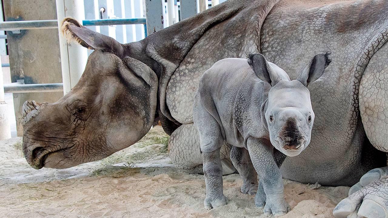 rare baby rhino at Zoo Miami