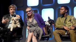 Carrie Fisher's French bulldog appears in 'Last Jedi'