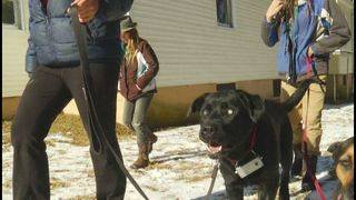 Blind Montgomery County dog gets help from sonar device