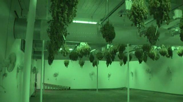 Detroit million-dollar marijuana bust 2