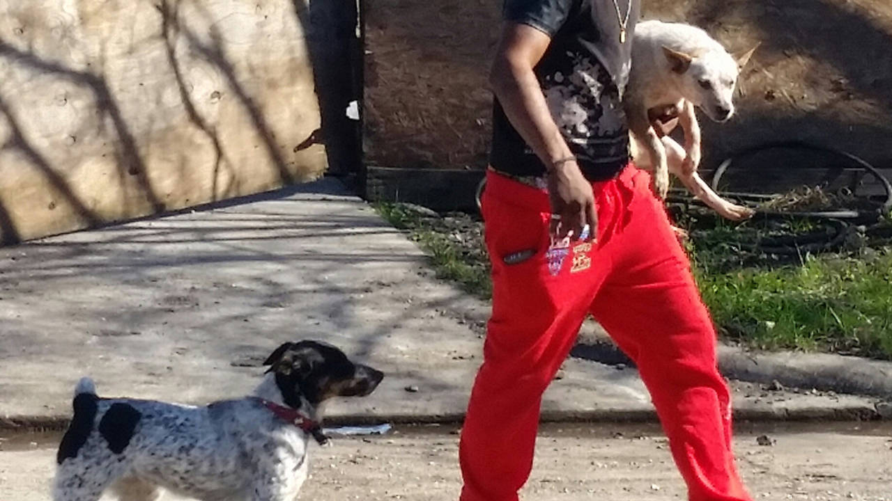 animal neglect 2 dogs 1-11-19_1547237041915.jpg.jpg