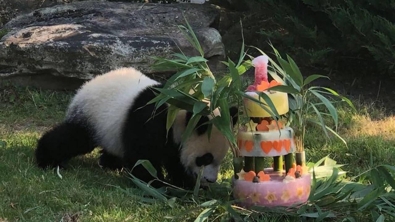 French-panda_1533384422210.jpg