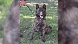 Reward offered as search continues for Live Oak K-9