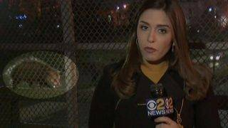 Opossum Bombs Live TV Thanksgiving Report by Jenna DeAngelis in New Jersey