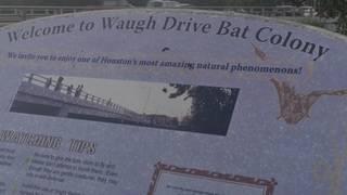 Click2Daily: Waugh Bridge bat colony impacted by Hurricane Harvey