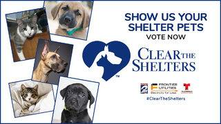 Vote For The Cutest Rescue Pet