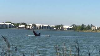 Small plane crashes in Oakland Park lake