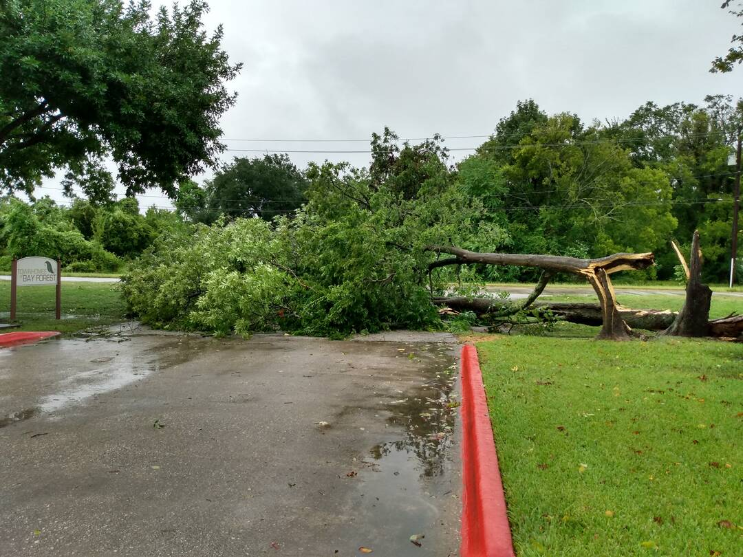 Down tree, blocking an entrance, but NO structural damage, and power is still ON!! Thankful and lucky! (Baytown, TX)