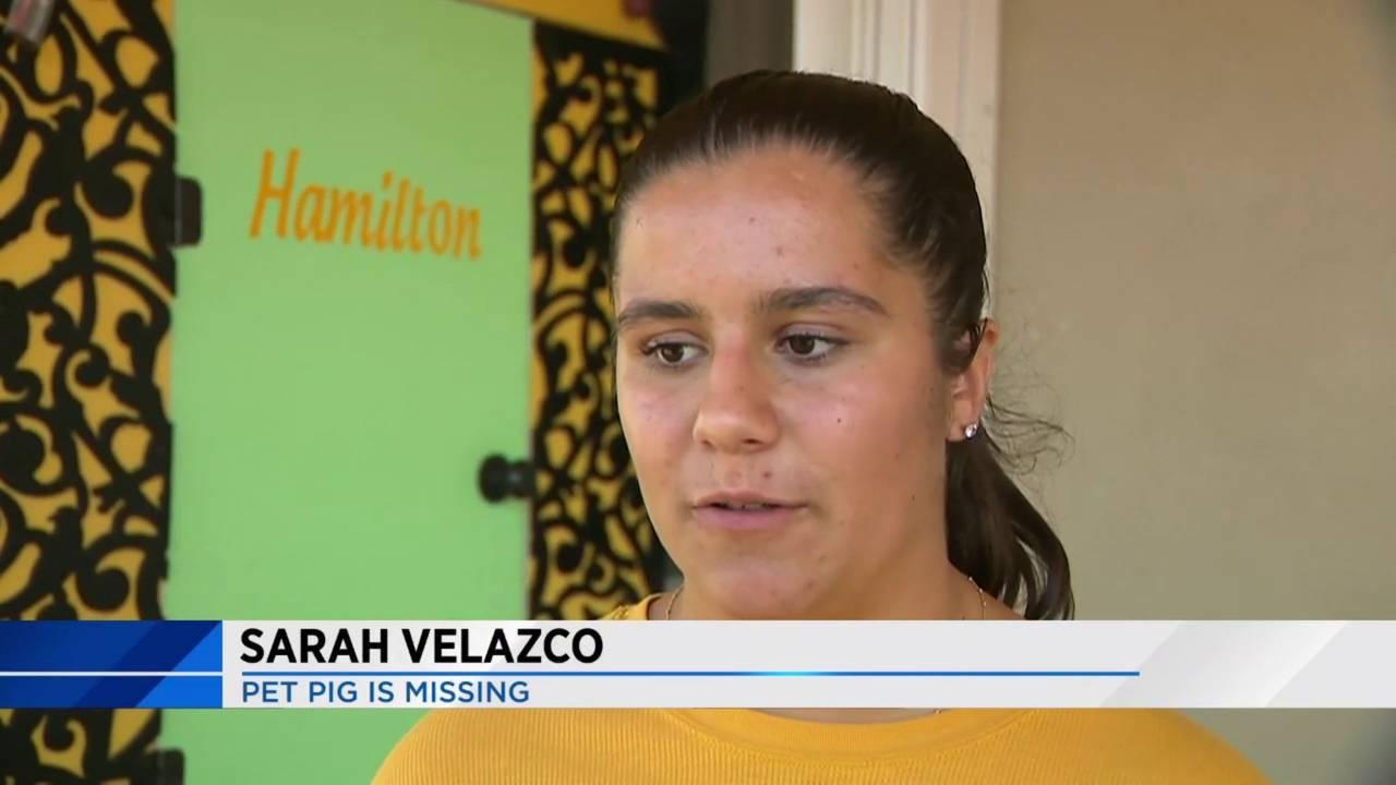 Sarah Velazco searches for pet pig