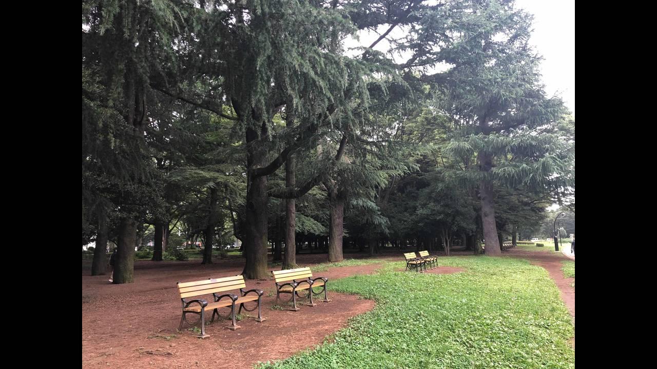 Yoyogi park 3_1563847087830.jpg.jpg