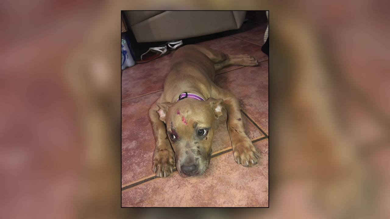 Puppy thrown from vehicle 08062019
